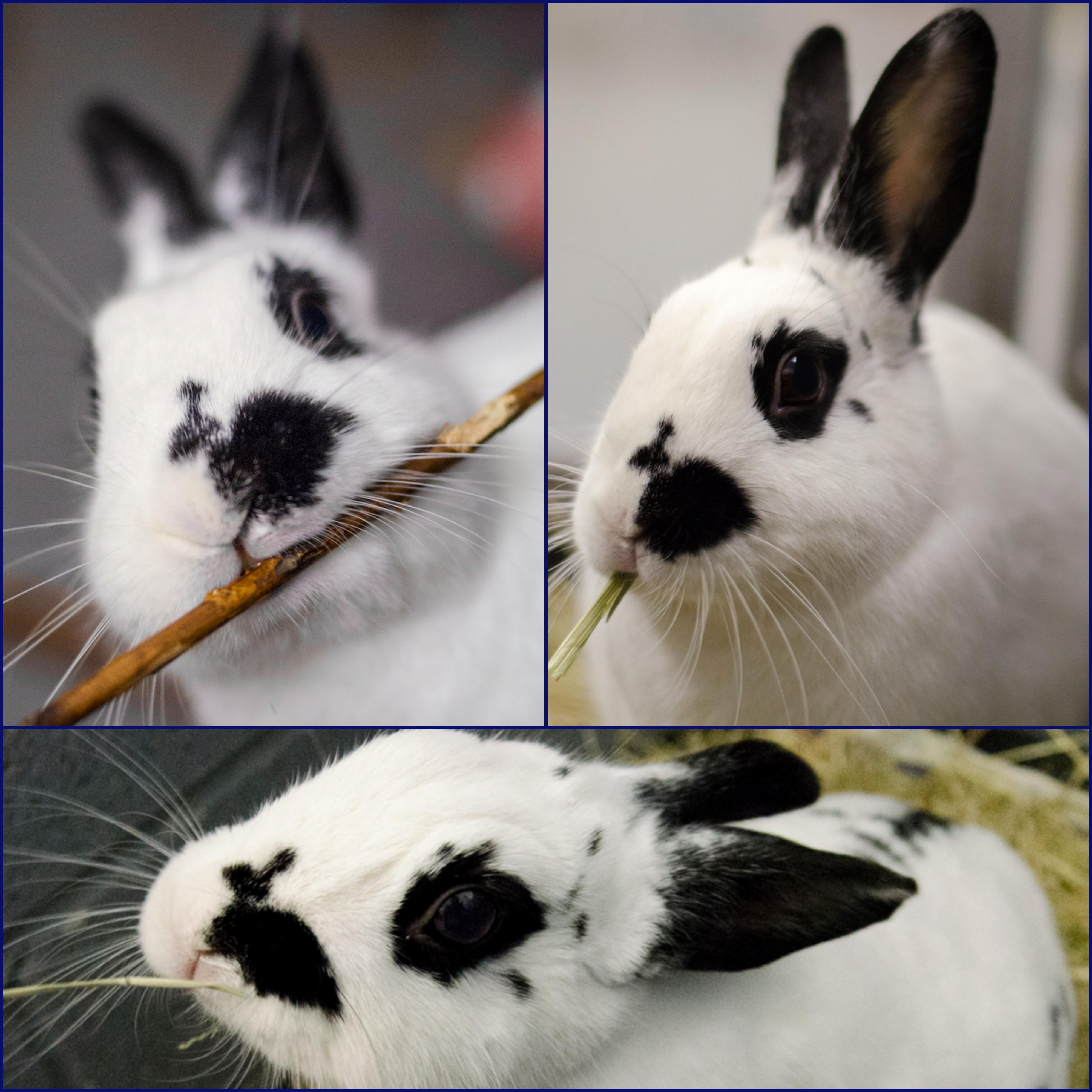 rabbit-zoe