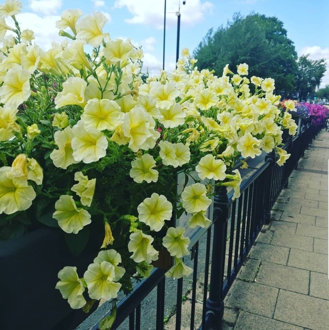 urmston-in-bloom