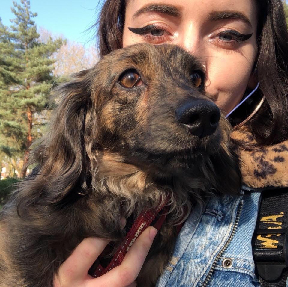 carys-mojo-pets-dog-close-up